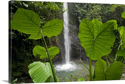 Waterfall in lowland tropical rainforest, Ecuador