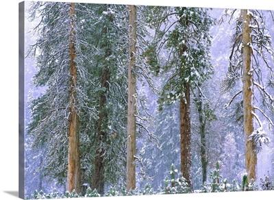 Winter in Yosemite National Park, California