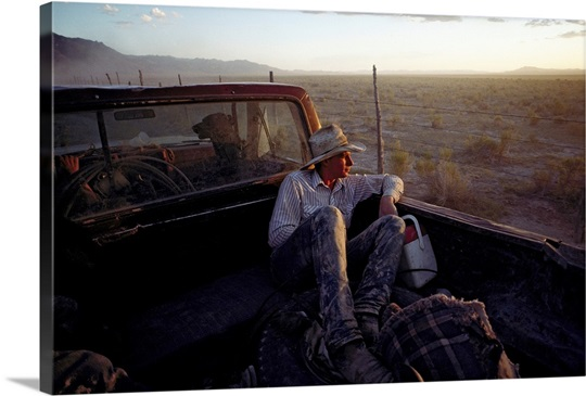 A cowboy, in the back of a pick-up truck along Highway 093 in sou th-central Nevada