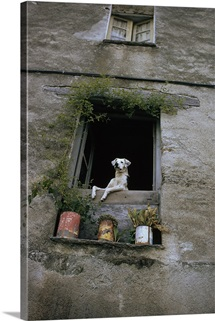 A dog peers from a window with plants, Corsica, France