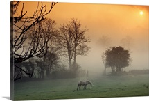 A horse grazes a mist shrouded pasture at sunset, Wales