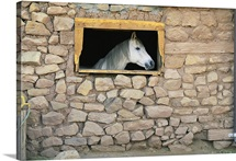 A horse, looking through window in stone wall, New Mexico
