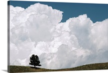 A lone pine tree under a cloud filled sky Prairie