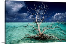 A petrified tree floats in the crystal-clear waters of Palmyra Atoll, Polynesia