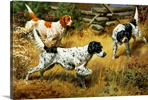 A Quail Hides In A Covert From Pointing English Setters Wall Art Canvas Prints