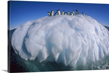 Adelie Penguin group riding sculpted iceberg, Terre Adelie Land, east Antarctica