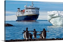 Adelie penguins walk on a beach where a cruise ship is anchored