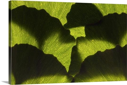 an arrangement of ginkgo leaves ginkgo biloba wall art canvas