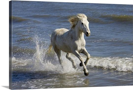 beautiful horse running on beach hot girls wallpaper. Black Bedroom Furniture Sets. Home Design Ideas
