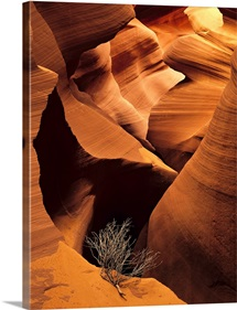 Eroded sandstone and a tumbleweed branch in a slot canyon, Arizona