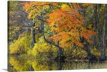 Fall colors reflected in Eagleville Lake