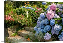 Flowers in a Cape Cod garden with stone steps