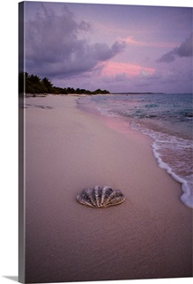 Giant clam shell on beach, Bikini Island, Bikini Atoll, Marshall Islands, Micronesia