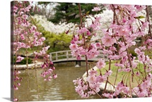 Japanese garden with weeping Higan cherry blossoms in foreground