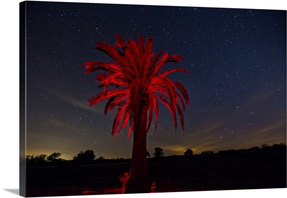 Light Paints A Palm Tree Red Against A Starry Night Sky On