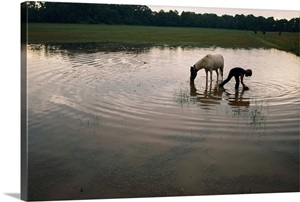 Mennonite Farm Child With Horse In Water Hole Ozark