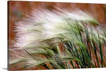 Prairie grass, Badlands National Park, South Dakota