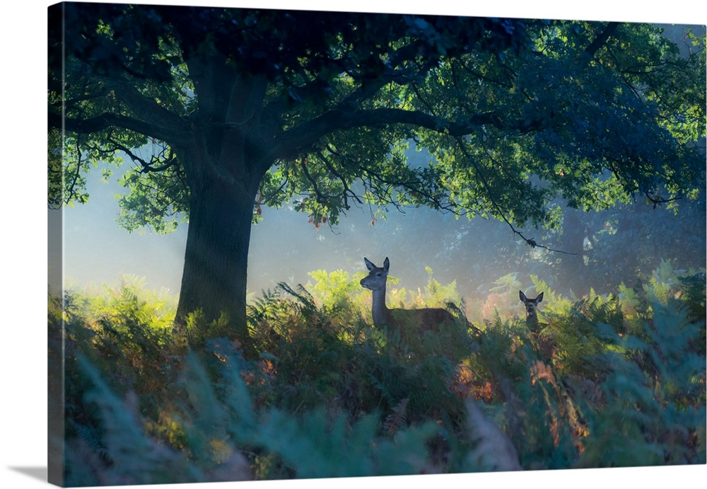 Red Deer Does On An Early Autumn Morning In Richmond Park Wall Art Canvas Prints Framed Prints Wall Peels Great Big Canvas