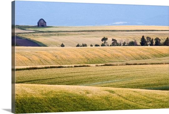 Sunset on rolling wheat fields in Drummond, Idaho
