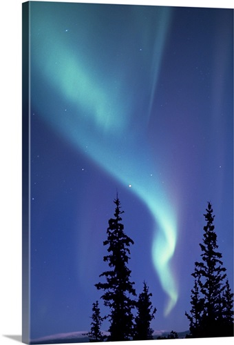 the aurora borealis or northern lights over silhouetted evergreen trees
