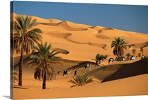 The caravan travels amongst the dunes and palm trees of the Sahara