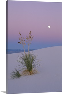 Twilight over yucca on sand dune, White Sands National Monument, New Mexico