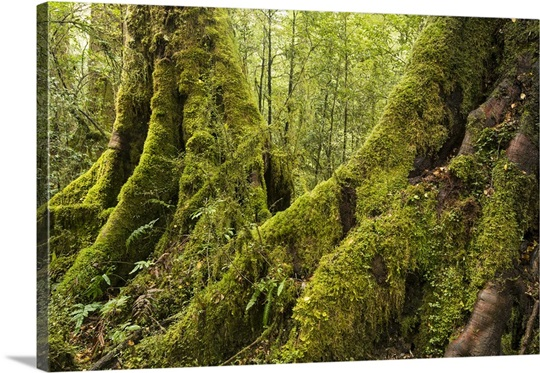 Vegetation on Milford Track in Fiordland National Park Wall Art ...