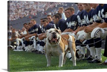 Yale mascot and football team, New Haven Connecticut