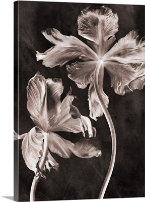 Antique Flower II
