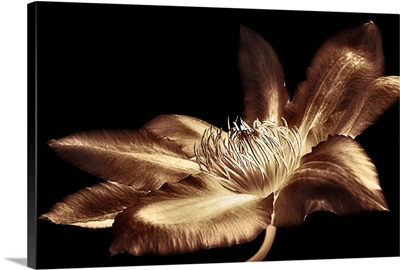 Antique Sepia Flower I