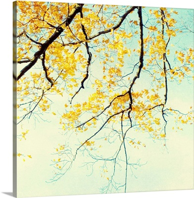 Asian Leaves