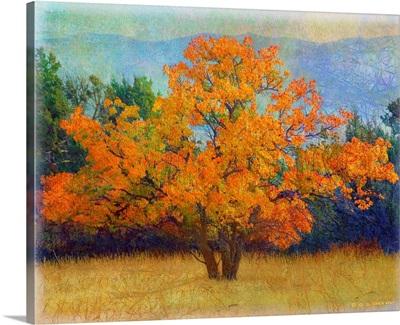Autumn Apricot Tree