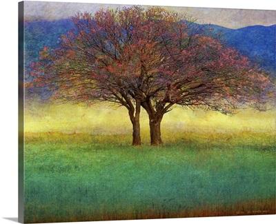 Autumn Apricot Tree II