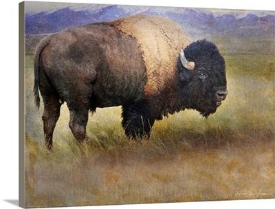 Bison Full
