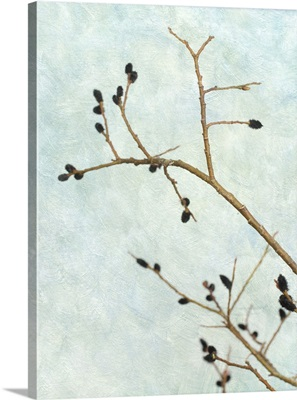 Black Pussy Willow I
