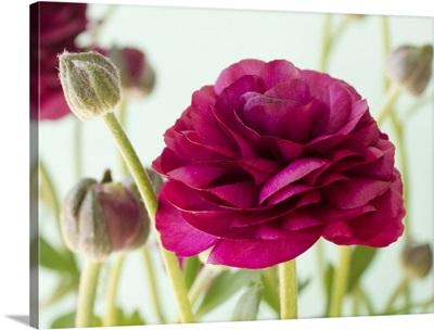 Blooming VIII