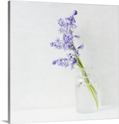 Blue Bell Bouquet II