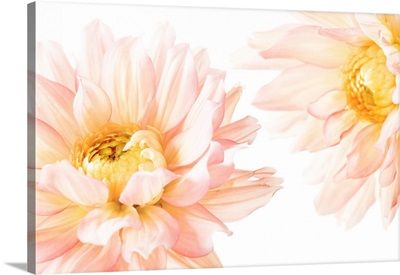 Bright Pink Flower I