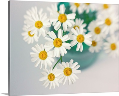 Daises in a Turquoise Vase
