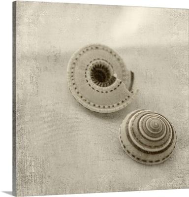 Designer Shells