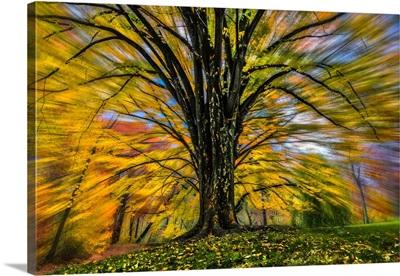 Fall Foliage Color Burst II