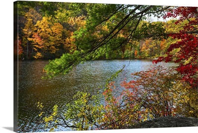 Fall Foliage in Bear Mountain V