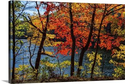 Fall Foliage in Bear Mountain VI