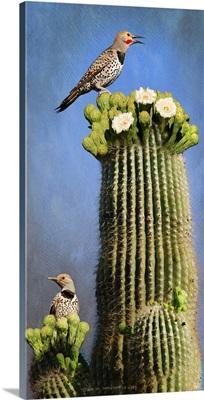 Flicker Saguaro