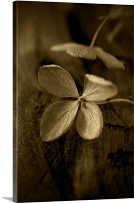 Flower Fragment