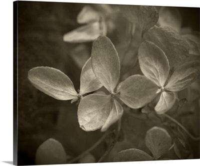 Flower Fragment IV