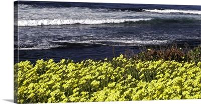 Flowers Sea