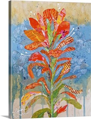 Indian Paintbrush I