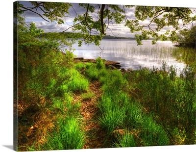 Ireland Killarney National Park, Muckross Grass