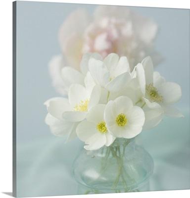 Little Bouquet Anemone